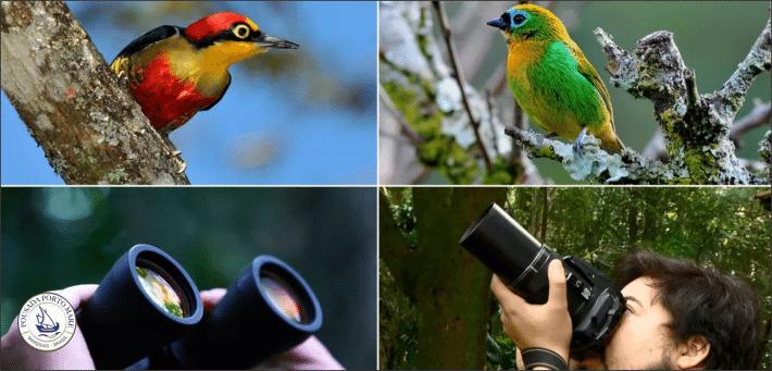 Você sabe o que é birdwatching?